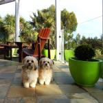 Our 3-year old Lhasa Apso girls Sarah and Jessica