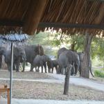 OMG - elephants walking around our tents!