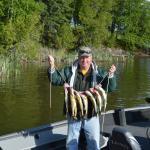 Big stringer of walleyes