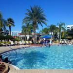 Zwembad met bar