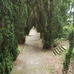 The Yew Walk