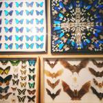 Mounted butterflies and bats
