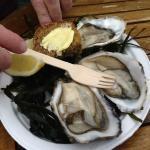 Oysters at Killary fjord