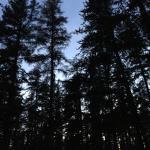 Kettle Lakes Provincial Park Photo