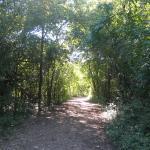 Bur Oak Trail