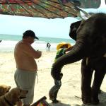 This is an old photo taken on a previous visits when elephants were still allowed on the beach