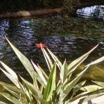 Foto de Doubletree by Hilton Anaheim - Orange County