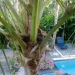 Photo of Terrace Bali Inn