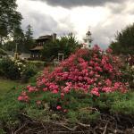 Booth Park Rose Garden