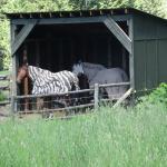 Pferde der Eigentümer der Lodge