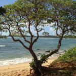 Anahola beach, secluded beauty