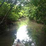 Foto de Whistler Eco Tours - River of Golden Dreams
