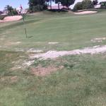 Sample condition of greens