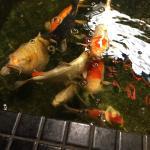 Entrance Fish