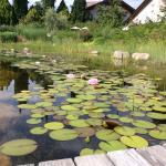 Schwimmteich mit Seerosen