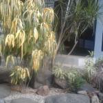 Foto de Hotel Nahua