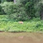 Deer seen from the garden