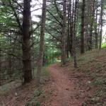 New River has great trails