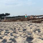 Beach/Seaweed