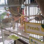 Foyer Bird