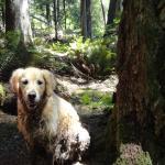 Faithful Guide Dog