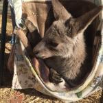 Tinakori Animal Farm Stay