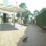 Photo de Don Miguel Playa Hotel
