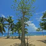 Jeune baobab sur la plage