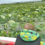 Долина лотосов в июне напоминает болото с кувшинками