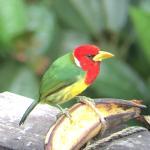 Foto de San Jorge Eco-Lodge & Botanical Reserve