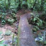 Trail in Park
