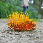 a spurt of colours, natural flora