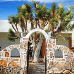 arco y arbol desertico