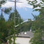 Photo de Cedar Motel