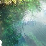 Cenote Escadero
