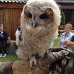 Battlefield Falconry Centre