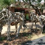 Even the Dried Wood horses were seeking shade on this day!