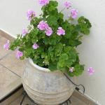 One of many flower pot