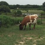 Photo de The Hideaway Ranch & Retreat
