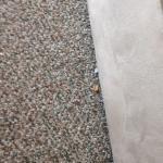 Crumbs on the floor.