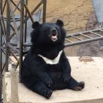 Yanqing Badaling Bear Park