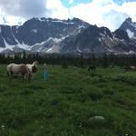Horses grazing in meadow