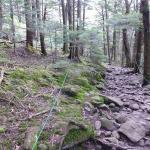 登山口すぐ ゆるやかな登り