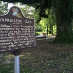 Evangeline Oak