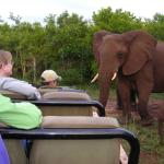 Foto de Amakhosi Safari Lodge