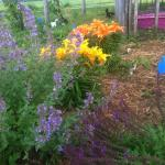 Our flower garden starts showing off in July.