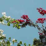 Eleouthkia Traditional and Botanical Park Foto