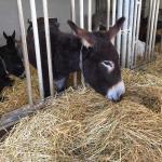 Donkey Park (Eselpark)