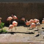 Flamingo haven