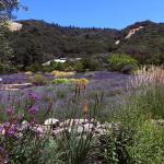 matanzas creek winery in june